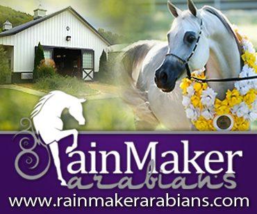 Rain Maker Arabians