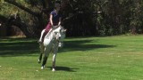 Archie Cox: Flatwork For Your Horse
