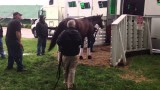 Orb Leaves Churchill Downs
