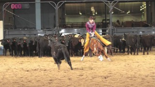 2014 Cattle Novice Championship