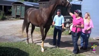 Ivana Pucker – Horse Racing Accident
