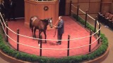 Unbridled's Song Colt Sells for $400,000 Fasig-Tipton Sale