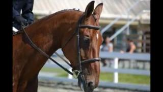 VIAHA Horse Shows 2014
