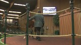 Keeneland September Yearling Sale Week 1