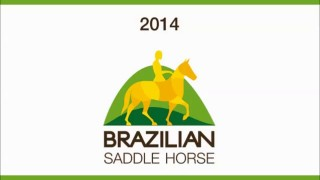 Brazilian Saddle Horse
