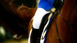 The Beauty Of Showjumping