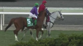 California Chrome Dazzles in Hollywood Derby