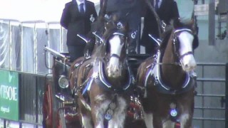 Heavy Horses at the Royal Highland Show