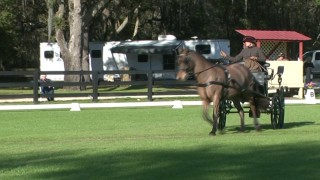 Nature Coast HDT – Carriage Horses