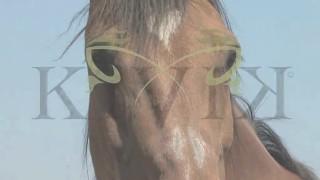 Paardencoaching bij Kivik