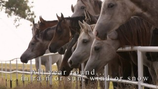 ARABIAN HORSE DAYS 2014