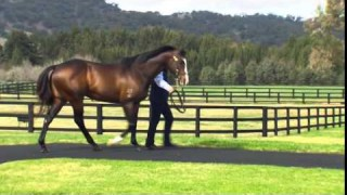 Vinery Stud Open Day