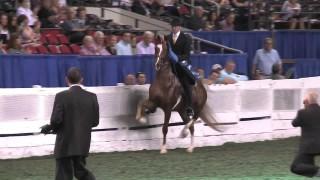 Macadamia – USEF Horse of Honor