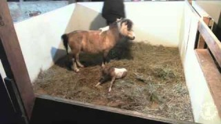 LIVE Birth – It's a Filly!