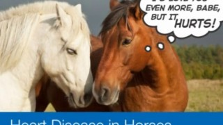 Heart Disease in Horses