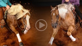 HDC Quarter Horses Stallions