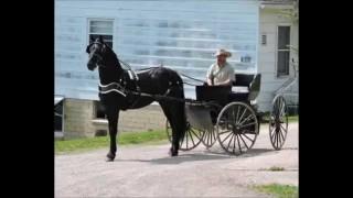RS Diamond Friesian Stallion