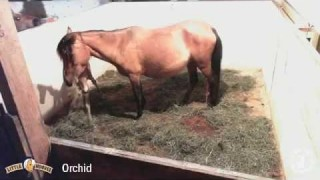 Orchid's First Foal