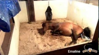 Emaline's Foaling 2015