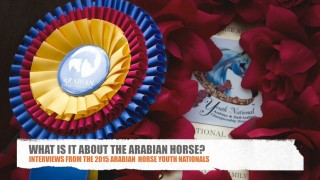 What Is It About The Arabian Horse?
