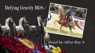 Afire Bey V ~ All-Time Sire