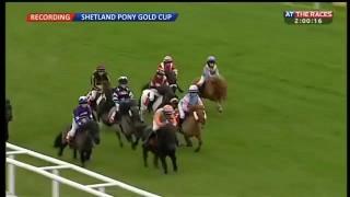 Shetland Pony Gold Cup – 2015