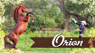Orion – Morgan Stallion