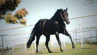 One N Only – AQHA Stallion