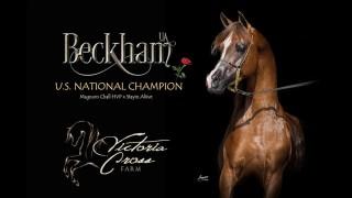 Beckham UA
