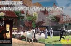 bruges-arabian-horse-event-2013