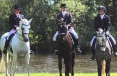 horses-in-harmony