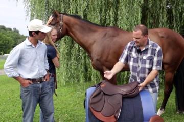 how-to-do-a-proper-saddle-fittin