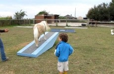 liberty-horse-agility-playtime-w