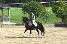 popeye-pony-stallion