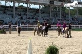 wihs-shetland-pony-steeplechase