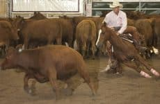 Patrick Cote/Daily Inter Lake Eli Auger, riding Rockin By Choice, finished in second place in the brideless cutting competition during the 5th annual Big Sky Futurity & Aged Event at Majestic Valley Arena Friday night.