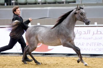 Total Horse Channel Equestrian Tv Watch Horse Videos Live Events And All Things