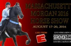 Thumb- AUG - Massachusetts Morgan Horse Show