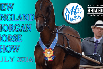 Thumb- JULY - New England Morgan Horse Show