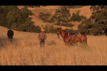 Desensitizing a horse to gunfire