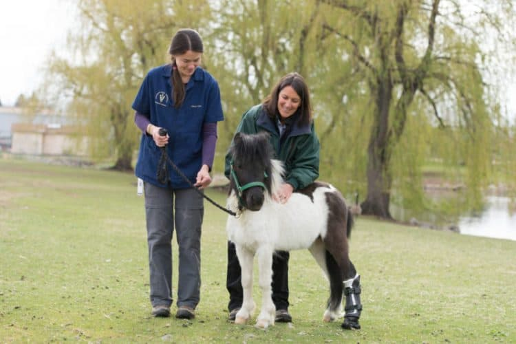 horse prosthetic