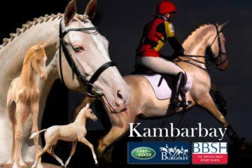 Kambarbay Perlino – Akhal Teke Stallion